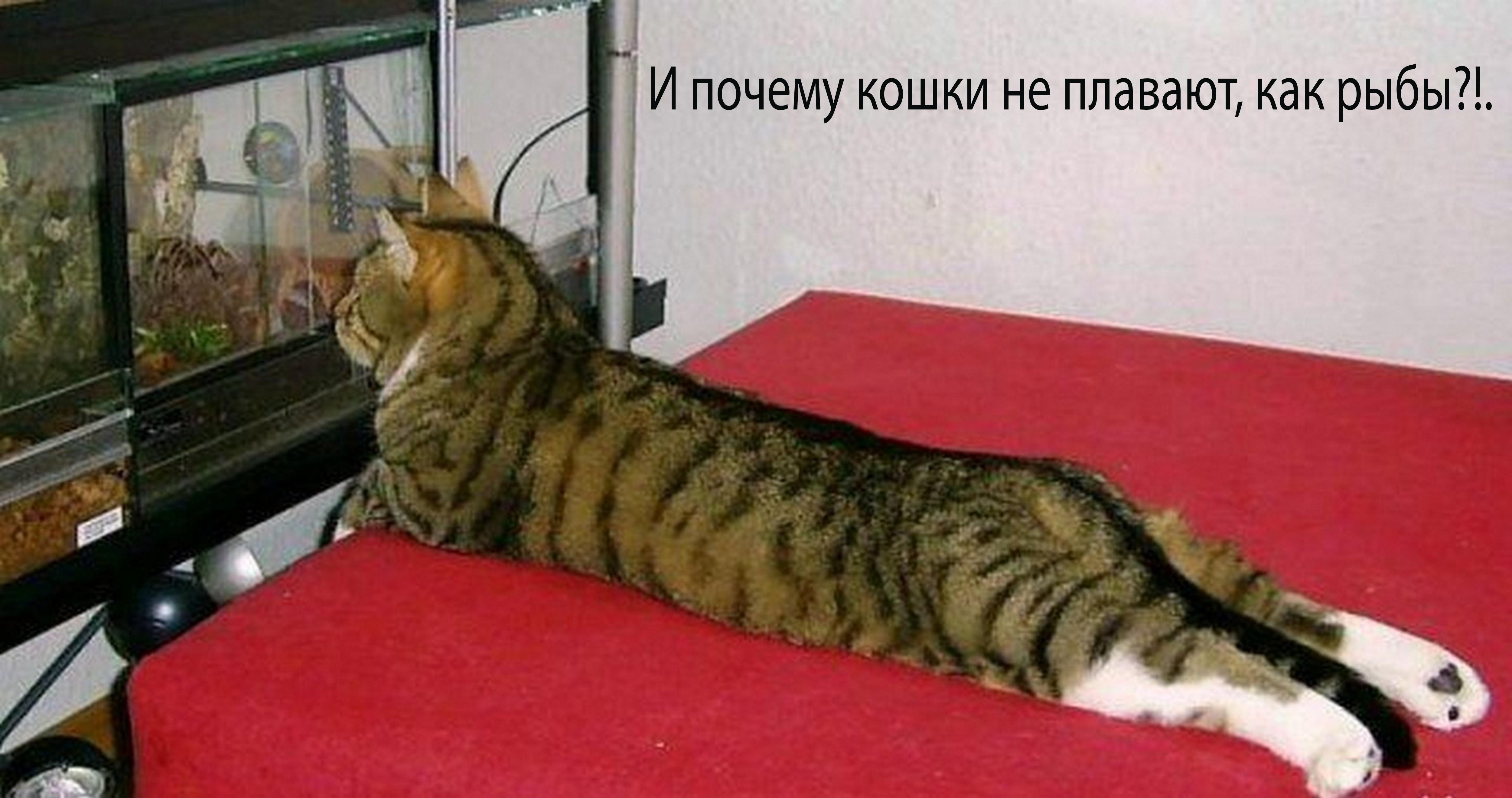 КОНКУРС «Самое смешное фото»