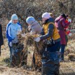 В Елабуге очистили от мусора Шишкинские пруды и стадион «Молодежный»