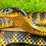 Правила поведения при встрече со змеями