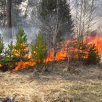 В нацпарке «Нижняя Кама» действует четвертый класс пожарной опасности