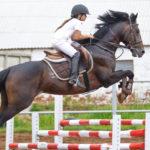 Елабужские наездники привезли призовые места с Кубка РТ по конному спорту