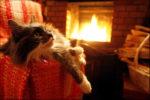 Обогрев дома в зимнее время