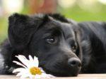 Городской конкурс «Собака – лучший друг человека»