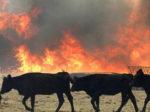 Восемь телят спасли из пожара на ферме в Елабужском районе