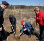 Елабуга присоединилась к акции «День посадки леса»