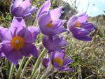 Сотрудники нацпарка «Нижняя Кама» призвали посетителей не рвать первоцветы