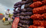 Более 21 тонны овощей продали на первой сельхозярмарке в Елабуге