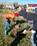В Елабуге восстанавливают зеленую рощу