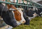 Потребительский кооператив елабужских фермеров