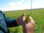 В нацпарке «Нижняя Кама» усилили охрану редкой птицы