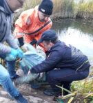 В Елабужском районе РТ в пруду нашли тело женщины