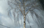 МЧС Татарстана напоминает о мерах безопасности во время штормового ветра