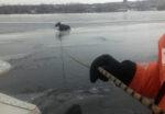На реке Кама в Елабужском районе спасли провалившегося под лёд лося