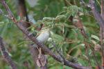 Национальный парк «Нижняя Кама» приглашает понаблюдать за птицами