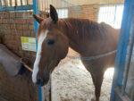 Елабужская конно-спортивная школа «Кентавр» выходит на новый уровень