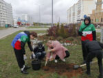 В Елабуге началась посадка деревьев
